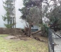В Житомире ураган повалил почти 30 деревьев