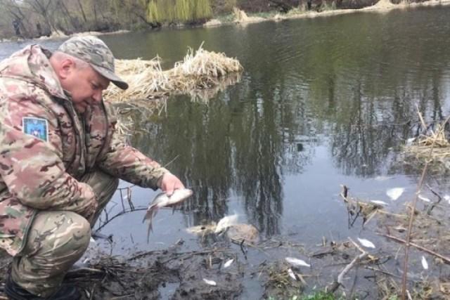 На Житомирщине массово гибнет рыба в реке Случ