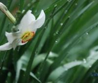 Синоптики прогнозируют дожди с грозами еще на пять дней