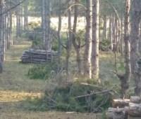 Лес на Херсонщине не вырубали, а прореживали - полиция