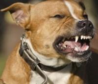 В Николаеве в этом году бродячие псы покусали вдвое больше людей - более двухсот