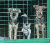 После протестов зоозащитников в Днипро вернули собак, которых вывезли в Харьков