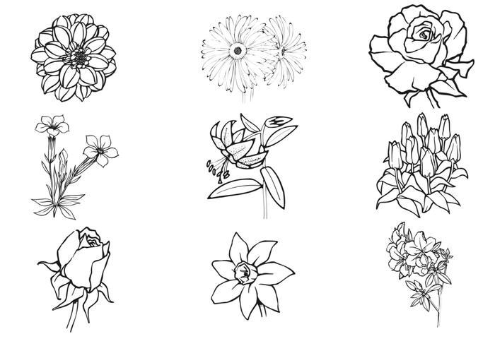 hand drawn flower vector pack