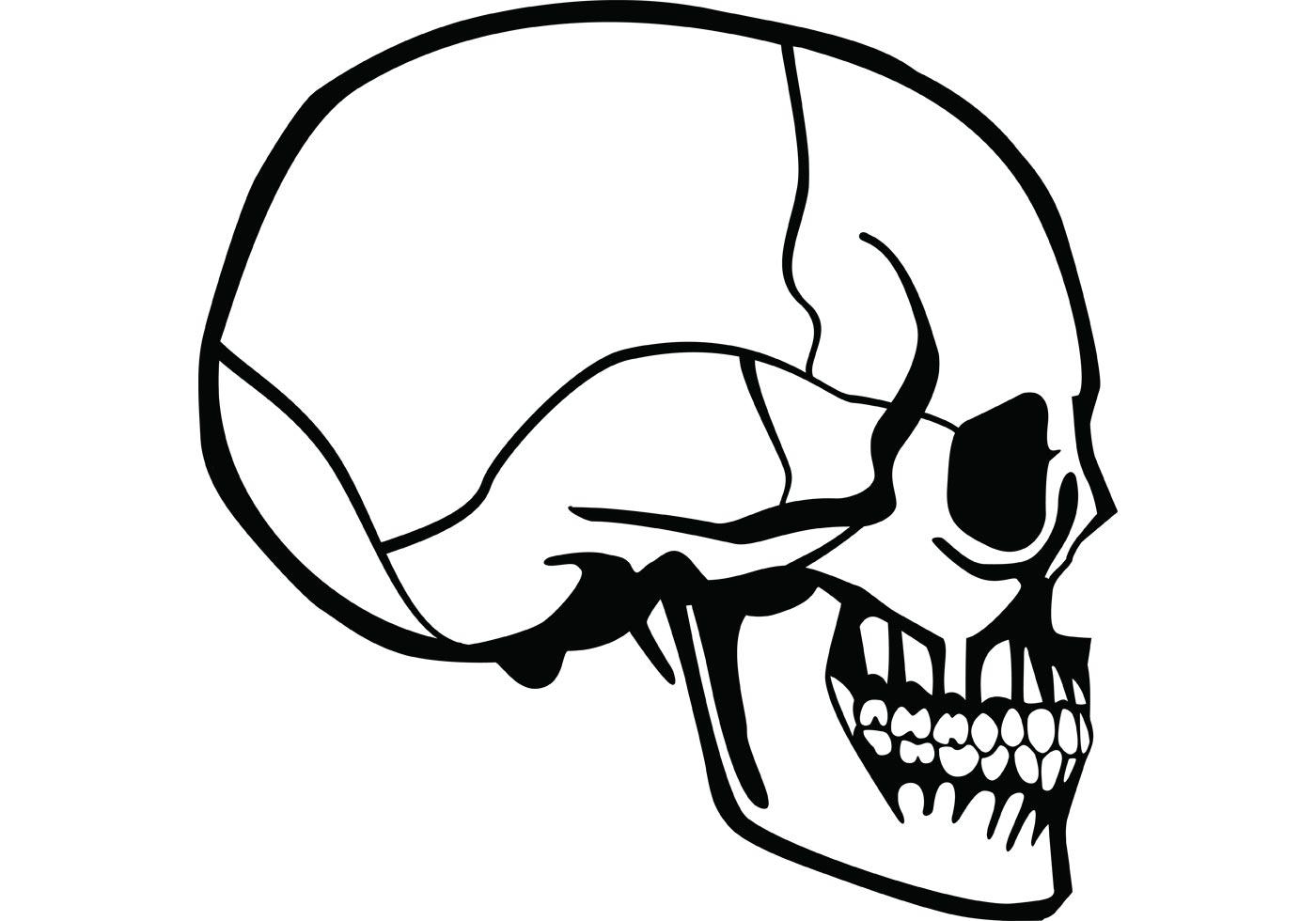 Skull Profile Vector