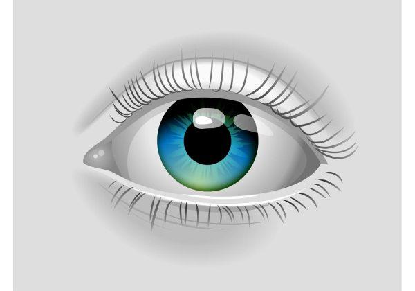 Realistic Vector Eye - Free Art Stock