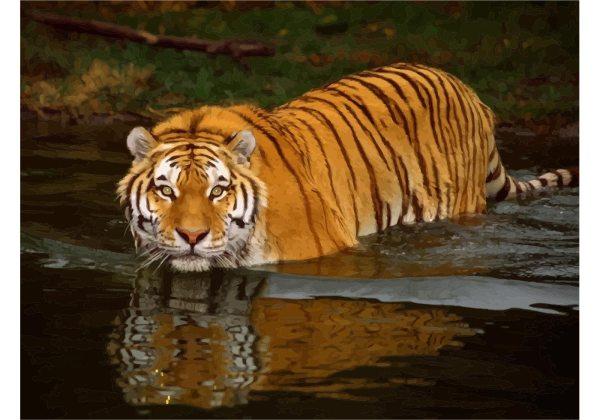 Wildlife Tiger - Free Vector Art Stock Graphics
