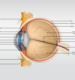 human eye diagram without label [ 1400 x 980 Pixel ]