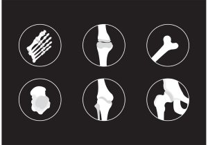 Bones and Joints Vector Icons  Download Free Vector Art, Stock Graphics & Images