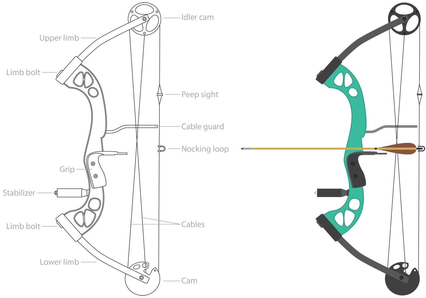 archery bow diagram pj trailer wire sport compound vectors download free vector art