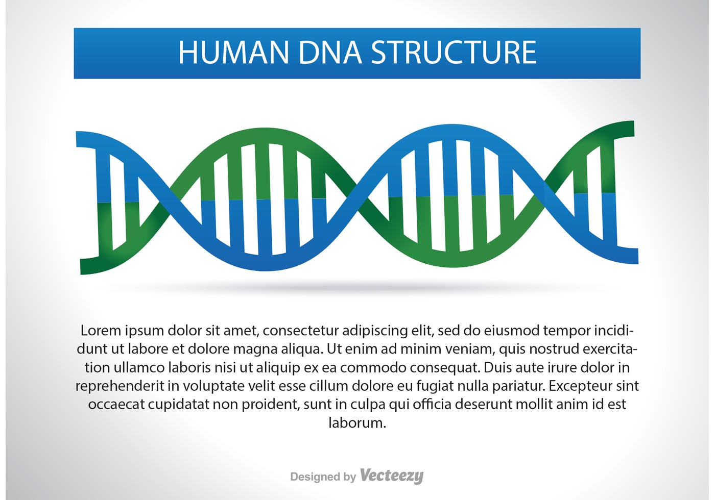 chromosome structure diagram apac air conditioner wiring diagrams dna illustration download free vector art