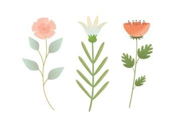 Vector Flower Illustration Download Free Vectors Clipart Graphics & Vector Art
