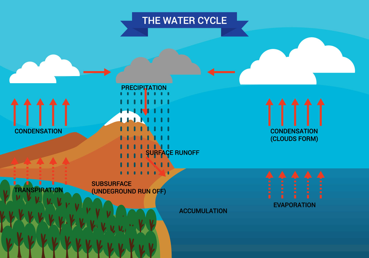 hight resolution of water cycle diagram vector
