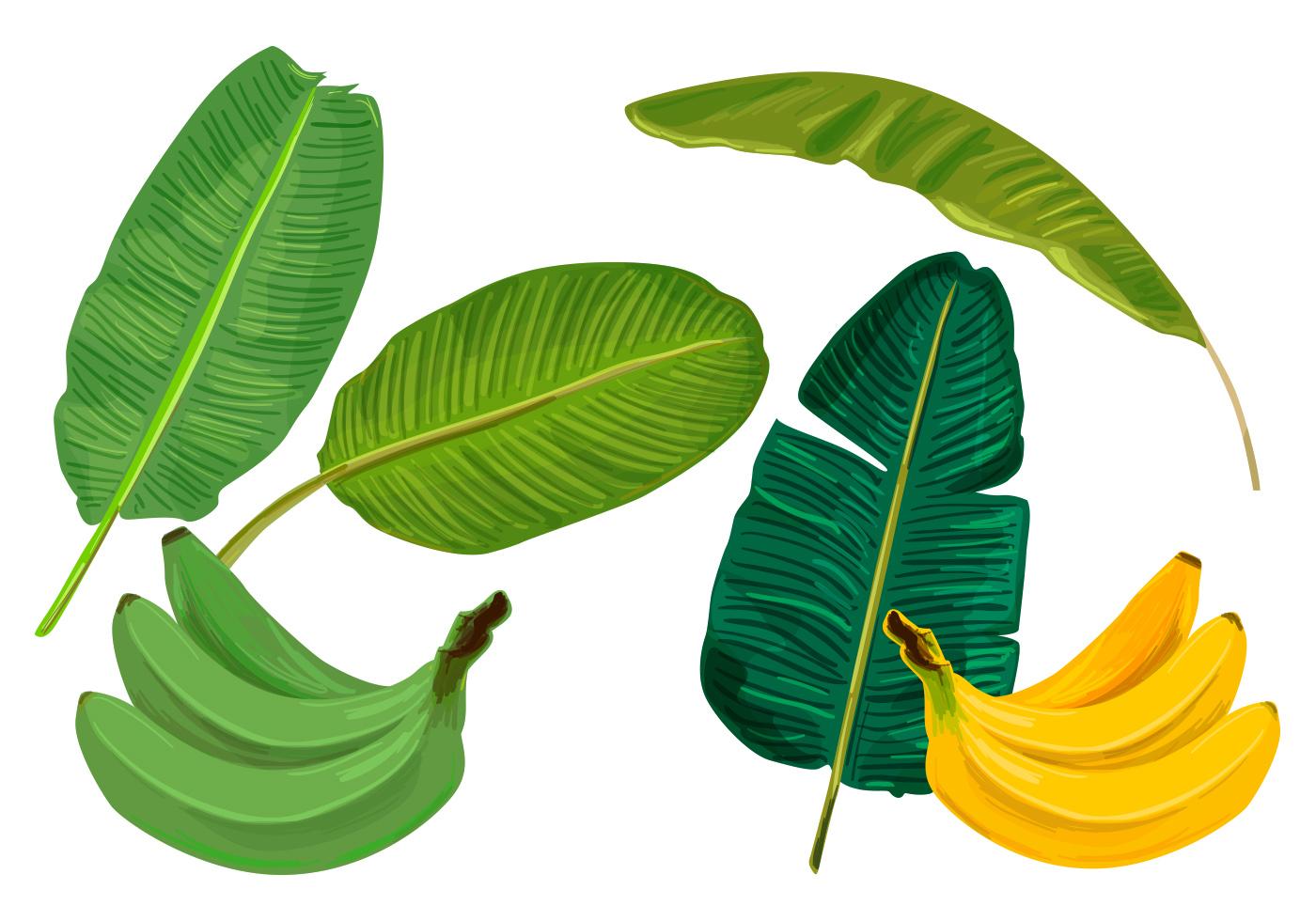 Tree Quote Wallpaper Mac Banana Leaves Vectors Download Free Vector Art Stock