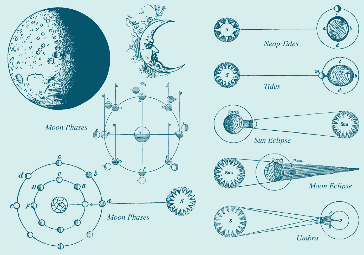 Old Style Drawing Moon Phase Vectors