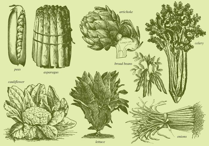 Old Style Drawing Vegetables Download Free Vectors Clipart Graphics Amp Vector Art