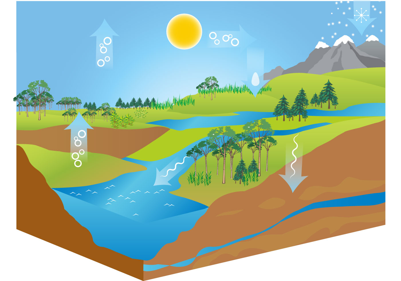 hight resolution of free water cycle diagram vector