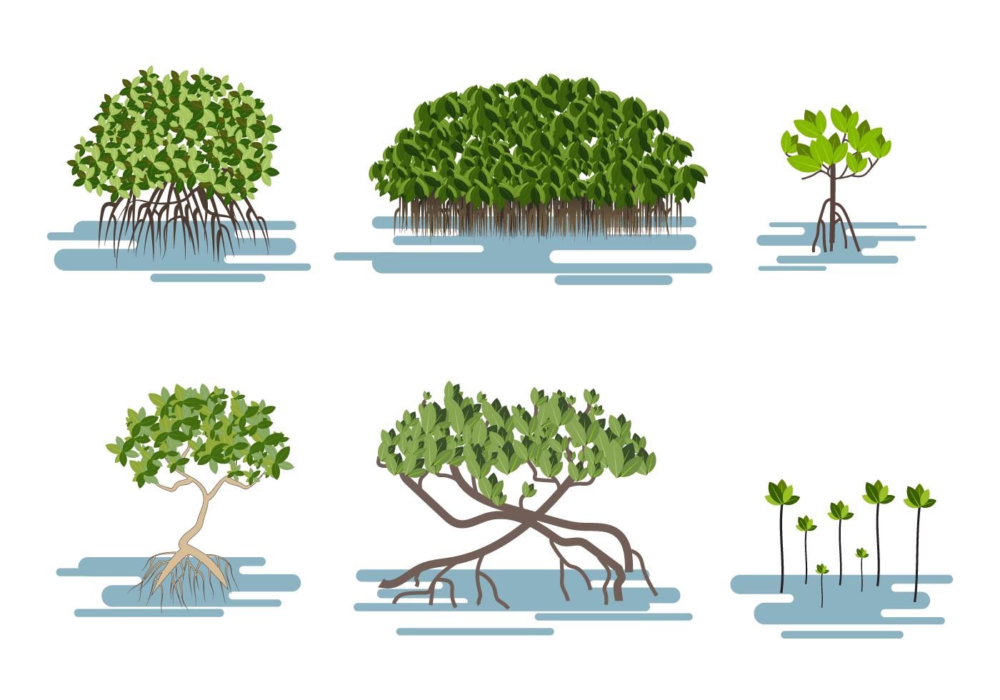 Free Mangrove Vector  Download Free Vector Art Stock