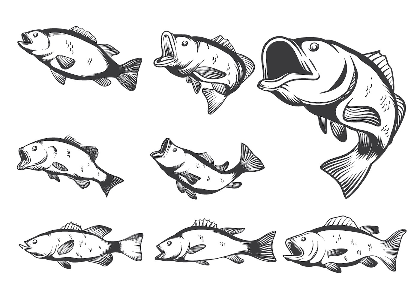 Bass Fishing Vector