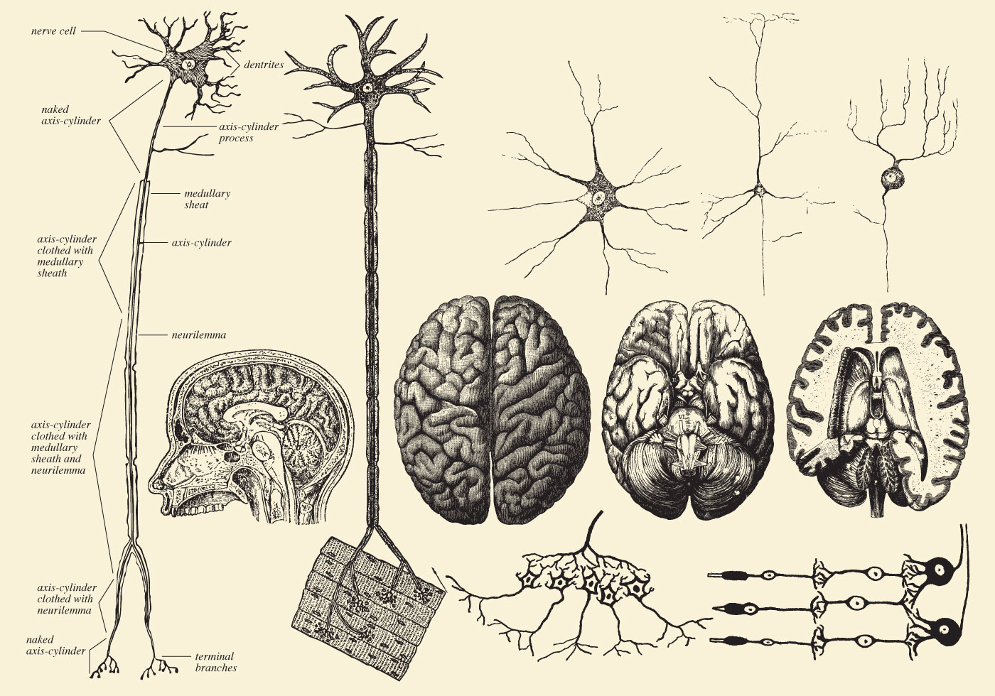 human brain cell diagram electric guitar wiring diagrams and neuron drawings download free vector art