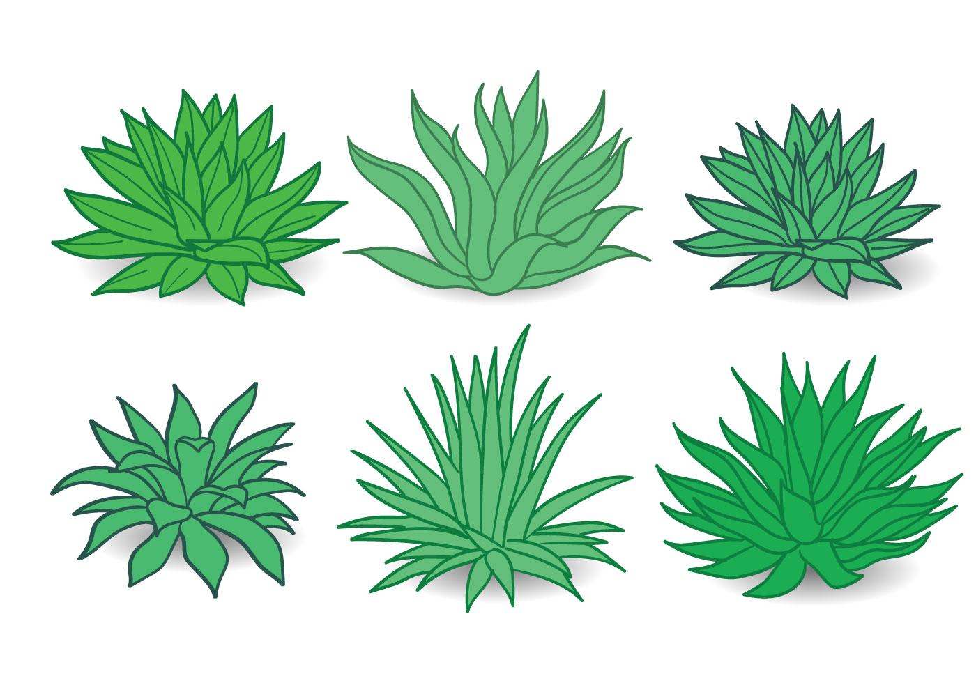 Maguey Vector Download Free Vector Art Stock Graphics