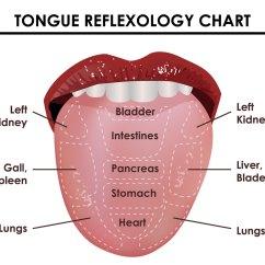 Health Tongue Diagram Tao 110 Atv Wiring Reflexology Chart Download Free Vector Art Stock