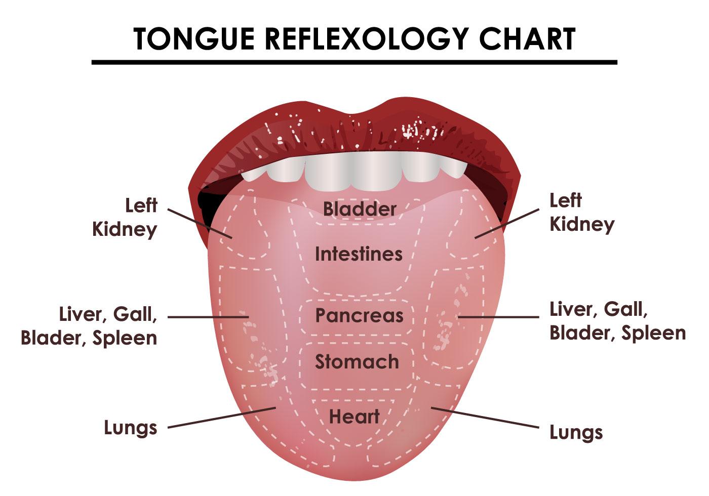 foot massage therapy diagram fujitsu air conditioner wiring tongue reflexology chart download free vector art stock
