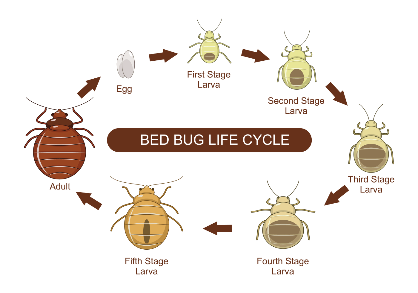 Stink Bug Metamorphosis Pictures To Pin
