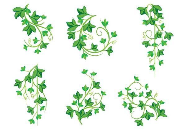 illustrations of poison ivy plants