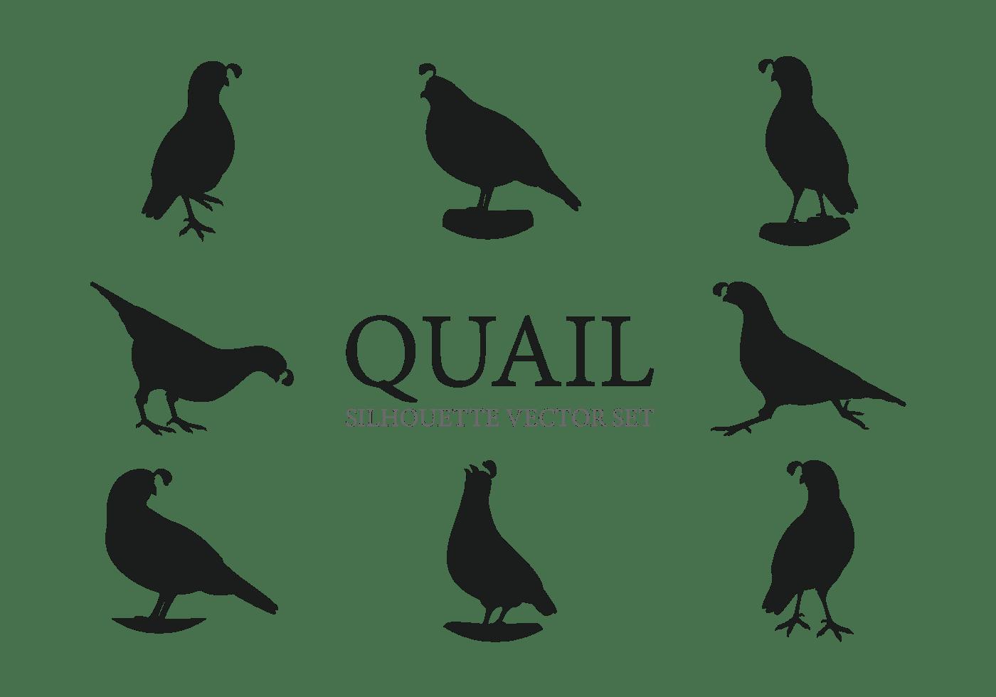 Quail Free Vector Art