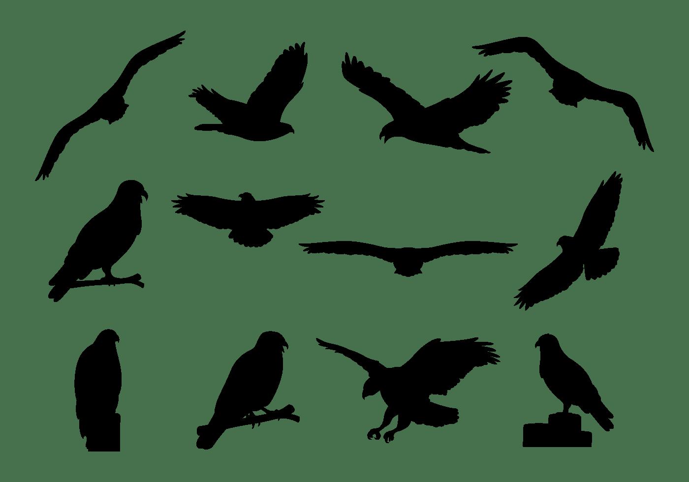 buzzard clipart