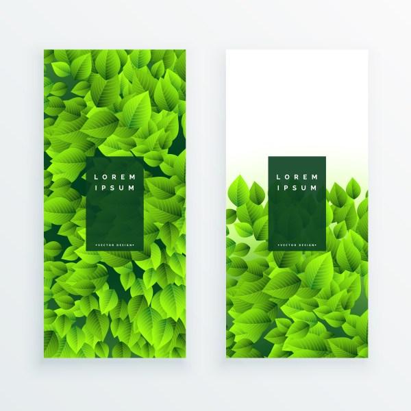 Set Of Green Leaves Banner - Free Vector Art