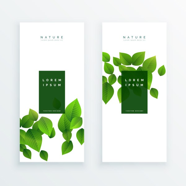 Elegant White Banner With Green Leaves - Free