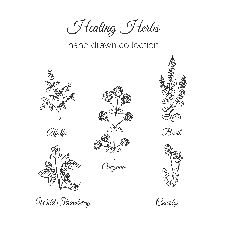 Herb Free Vector Art