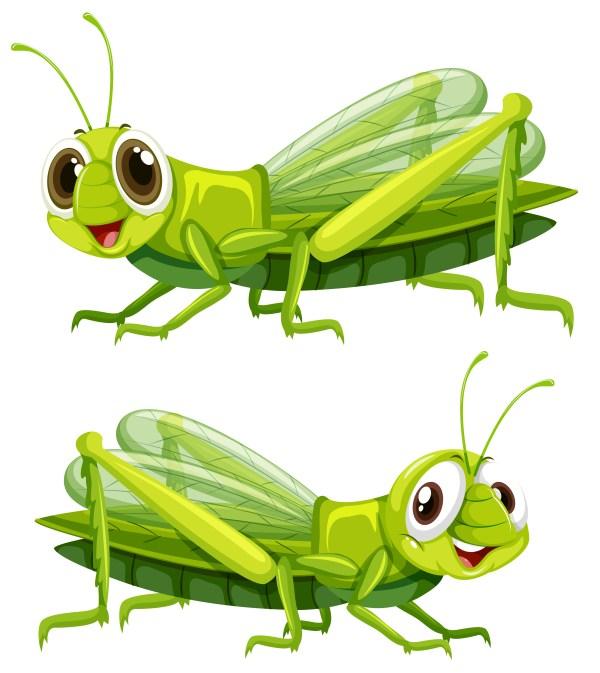 grasshopper free vector art - 4064