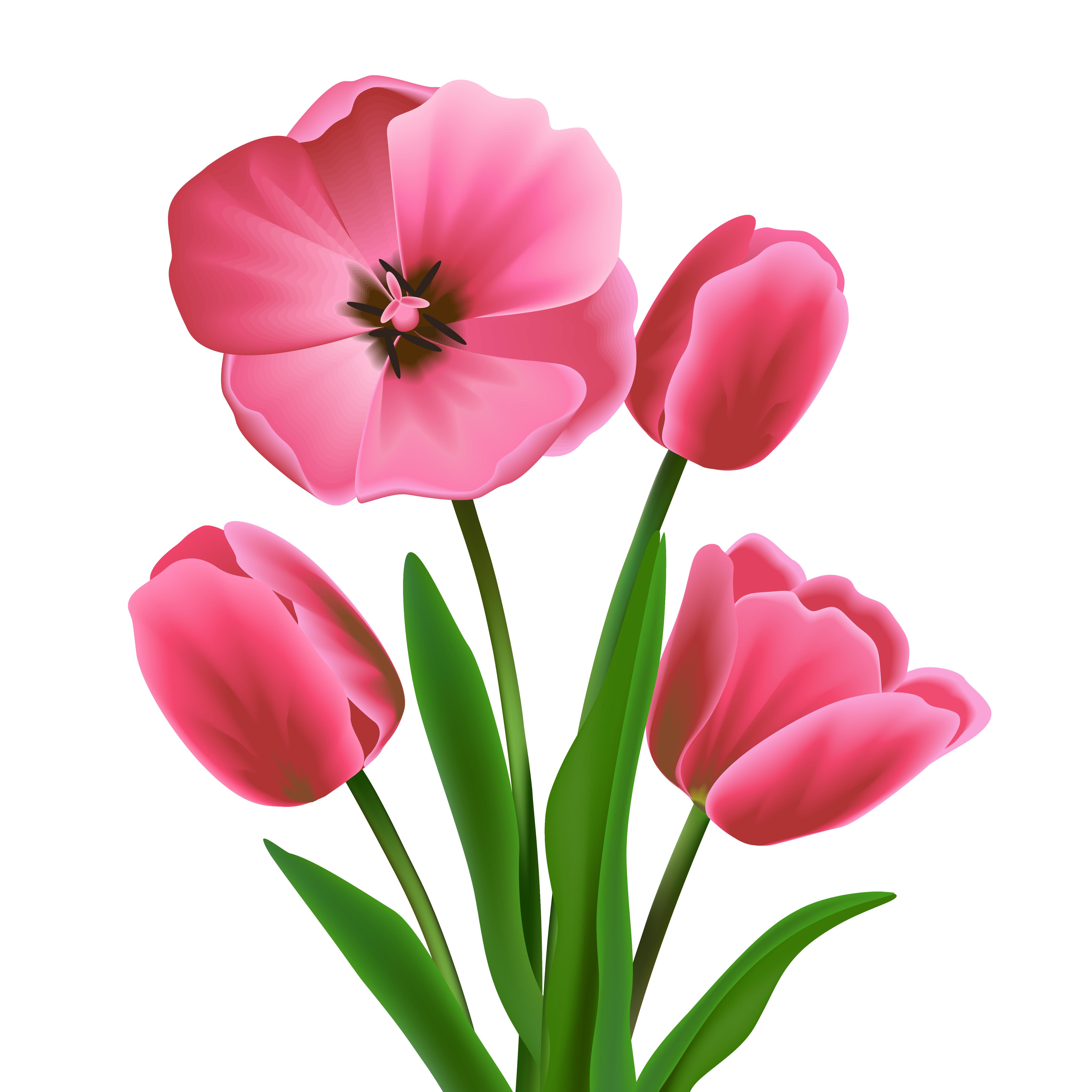 Tulip Flower Pink Download Free Vectors Clipart Graphics Vector Art
