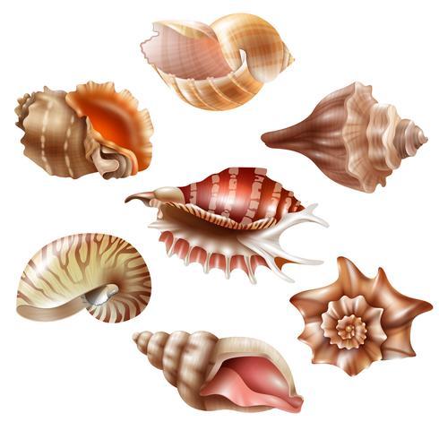 realistic seashell set vector
