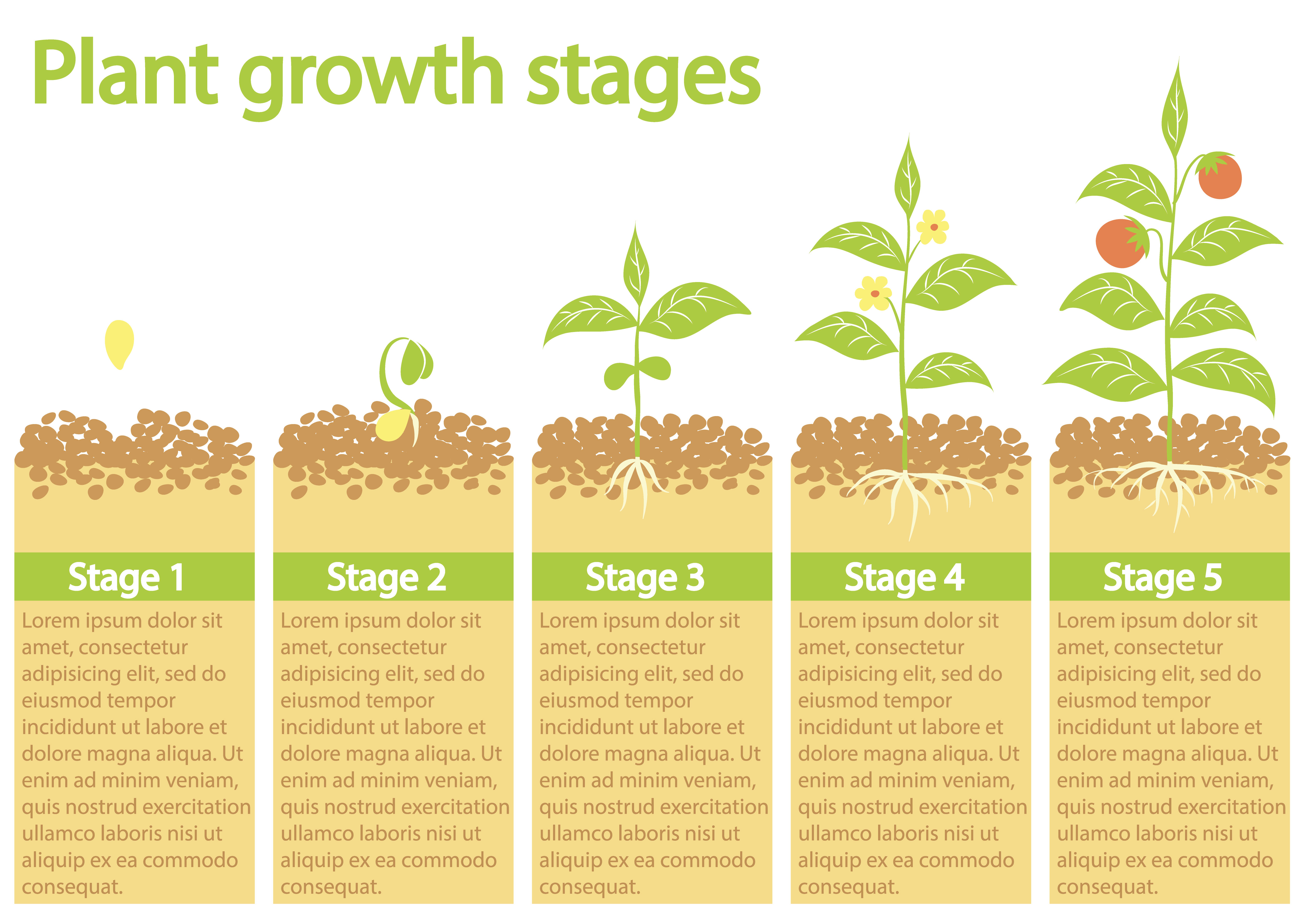 Plants Growing Infographic Plants Growing Process Plants