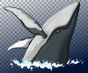 Blue whale head in water on transparent background Download Free Vectors Clipart Graphics & Vector Art