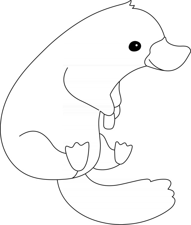 Platypus Kids Coloring Page Great for Beginner Coloring Book