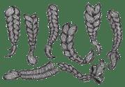 braided hair free vector art