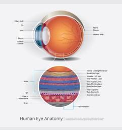 human eye anatomy vector illustration [ 5000 x 5000 Pixel ]