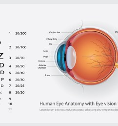 human eye anatomy with eye vision for glasses vector illustration [ 5000 x 3125 Pixel ]