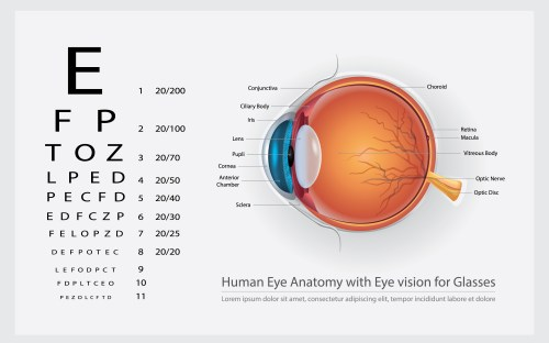 small resolution of human eye anatomy with eye vision for glasses vector illustration