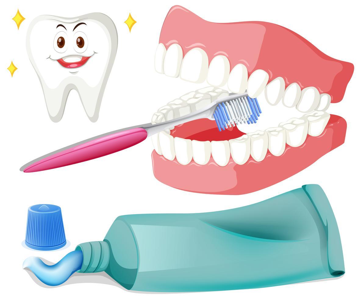 Zähne putzen mit Pinsel und Paste - Download Kostenlos
