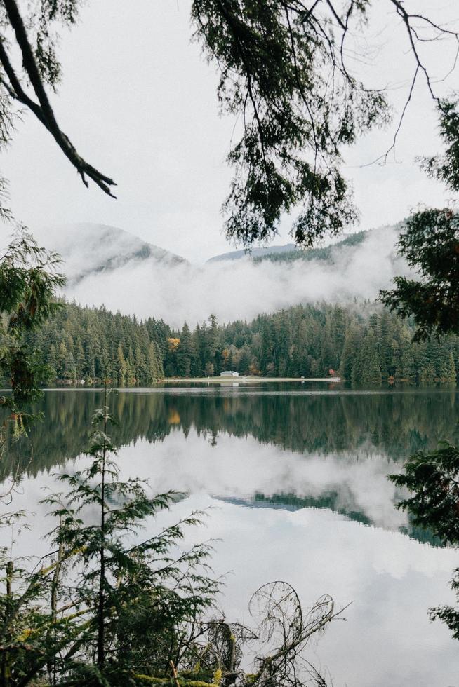 https fr vecteezy com photo 1401491 arbres verts au bord de plan d eau calme