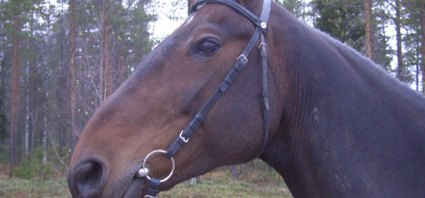 Tweets som luktar häst