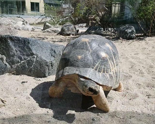 Parken Zoo Del 2