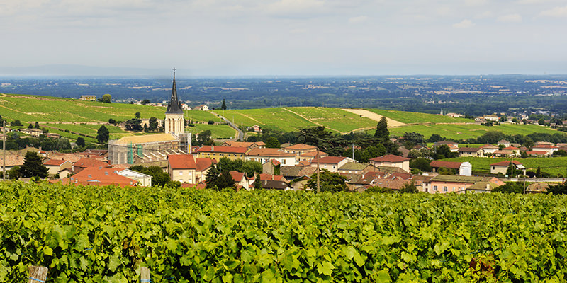 Discover Beaujolais, The Ugly Duckling Amongst French Wines