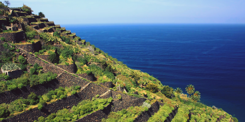 La gomera Guide to the wines of the Canary Islands