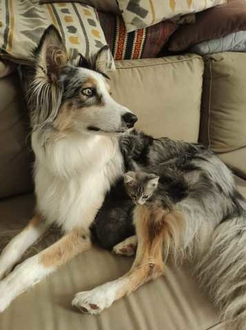 Elle Fait L'amour Avec Son Chien : l'amour, chien, Saint-Valentin, Belles, Photos, D'amour, Animaux, Wamiz